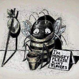 2016-03-bees-beggar