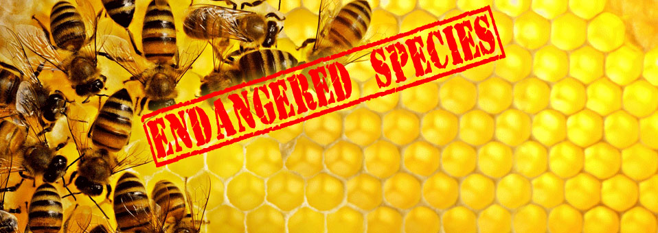 What's All the Buzz About Honey Bees?