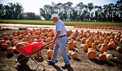 pumpkins-man