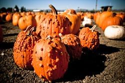 pumpkins-warts