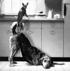 teamwork-dogs